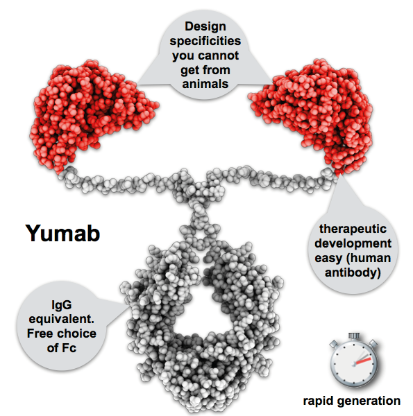 Yumab-explained